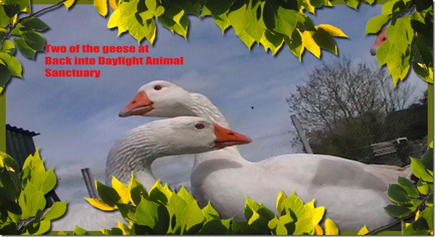 Ashampoo_Card - 2014.10.28 16.55 - 001 - Copy
