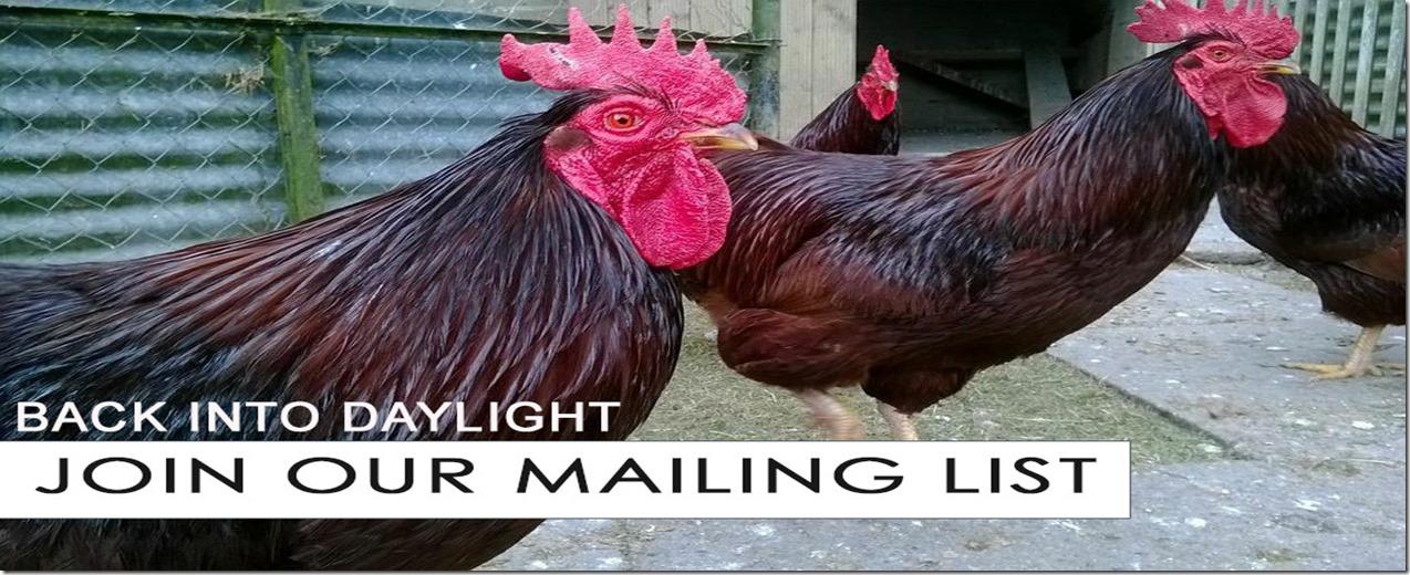 back-into-daylight-newsletter