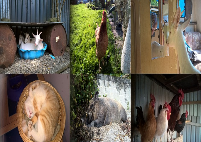 some of the Animals
