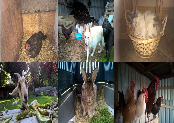 Some of the Sanctuary Animals