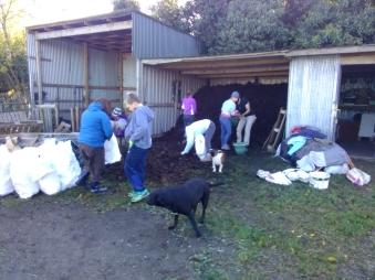 dublin-vegfest-volunteers-030