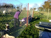 dublin-vegfest-volunteers-041