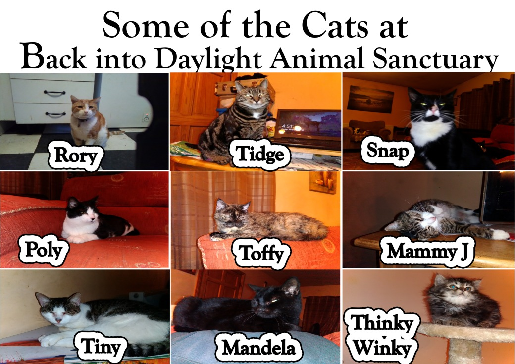 Some of the cats at Back into Daylight Animal Sanctuary