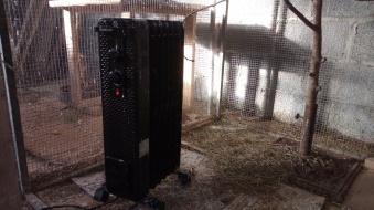 Birds heaters 2-2-2019 2 2019-02-02 002