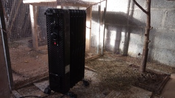 Birds heaters 2-2-2019 2 2019-02-02 002