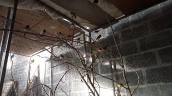 Birds heaters 2-2-2019 2 2019-02-02 003