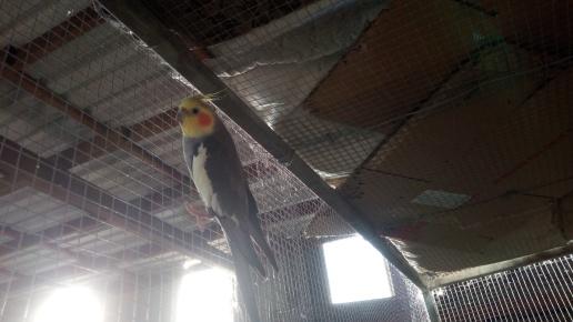 Birds heaters 2-2-2019 2 2019-02-02 012