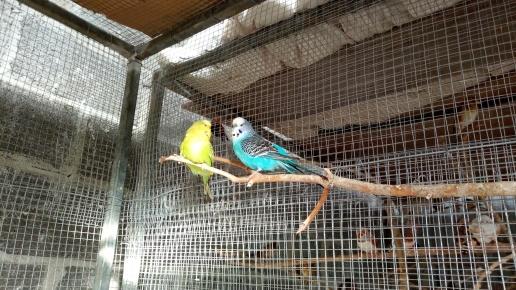Birds heaters 2-2-2019 2 2019-02-02 016