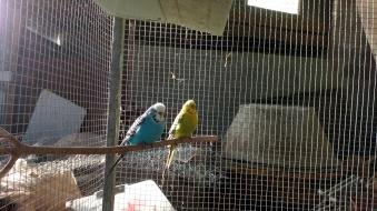 Birds heaters 2-2-2019 2 2019-02-02 018