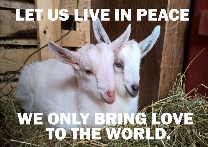 Karina and will goats